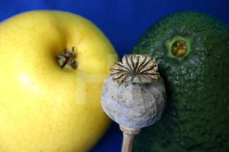 Apfel, Avocado und Mohnkapsel