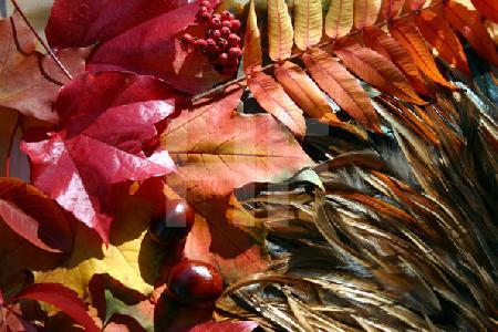 Herbstblätter und Federfächer