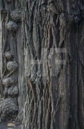 Zwei Bäume im Südpark