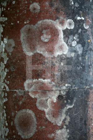 Säule, Stourhead, Wiltshire