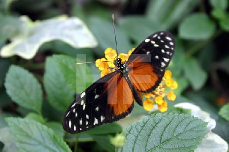 Schmetterlingspark auf Rügen