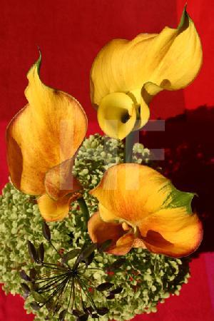 Drei gelbe Callas-Lilien über getrockneter Schneeball-Hortensie Eines der Bilder für das Cafe im Wallraff-Richartz-Museum in Köln