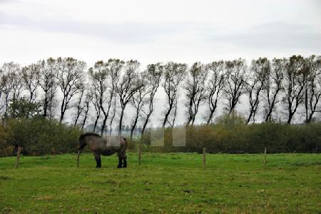 Pferd auf einer Wiese bei Damme, Holland