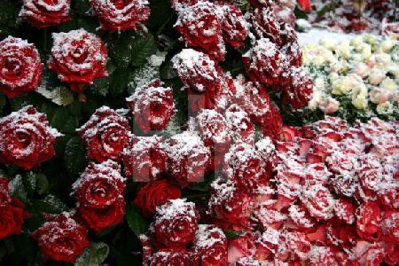 Verschneite Friedhofskränze