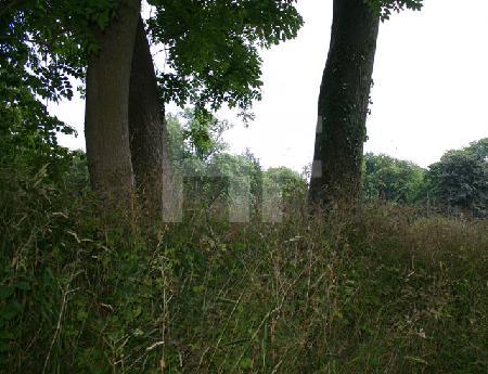 Bäume in Wiese