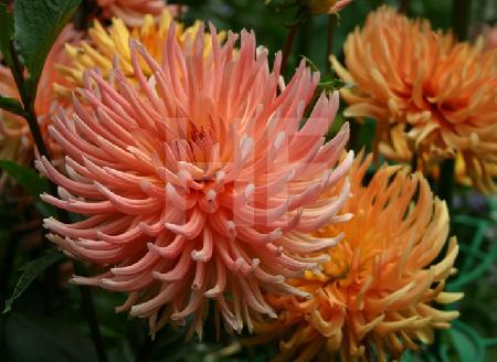 orange Astern