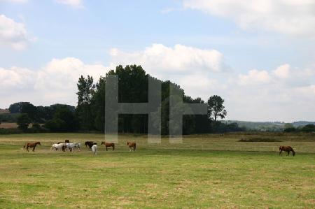 Pferde auf einer Weide in Südengland