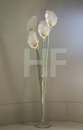 Vier weiße Callas in Vase