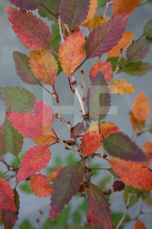 Bäumchen im Herbst