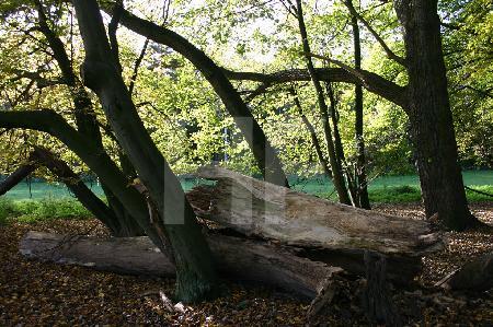 Umgestürzter Baumstumpf