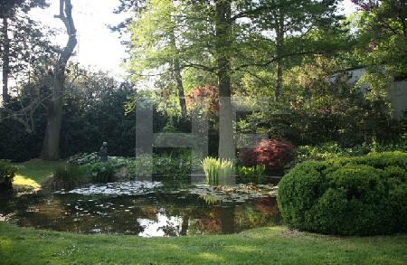 Teich im Garten B. in Köln
