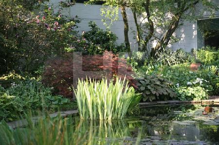 Teich im Garten B. in Köln, Detail