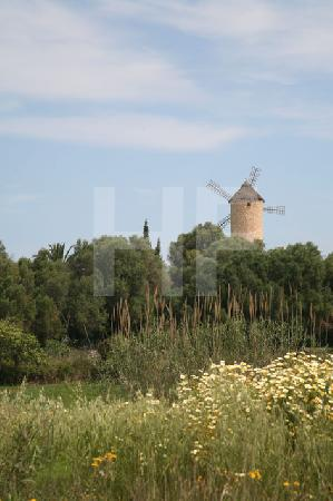 Windmühle in der Nähe von Artå, Mallorca