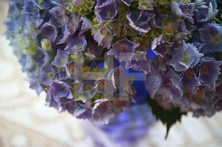 Blaue Hortensien in blauer Glasvase