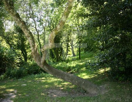 Baum im Park des Conservatoire Botanique von Brest, Bretagne