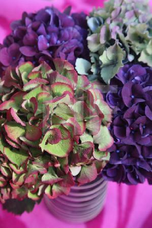 Violette, blaue und rotgrüne Hortensien (Hochformat)