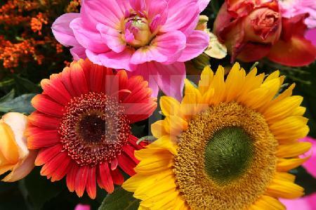 Bunter Herbstblumen-Strauß (1)