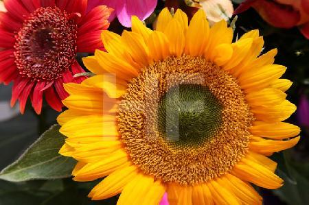 Bunter Herbstblumen-Strauß (4)