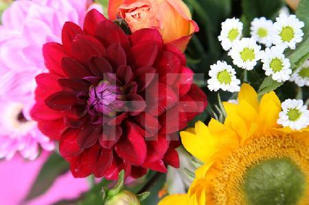 Bunter Herbstblumen-Strauß (5)