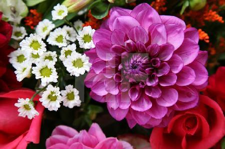 Bunter Herbstblumen-Strauß (7)