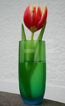 Kleine rote Tulpe in grüner Vase