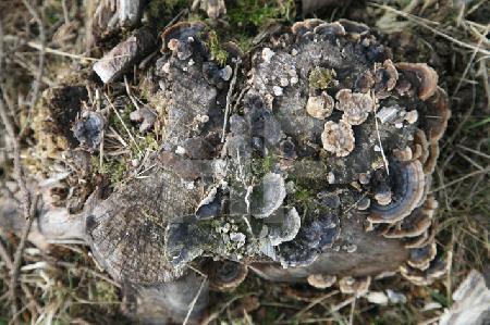 Moos, Flechten und Pilze an einem Baumstumpf