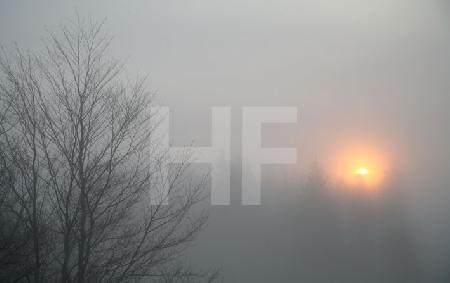 Nebel auf dem Kahlen Asten im Februar
