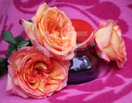Rosen mit lilaroter Glasschale
