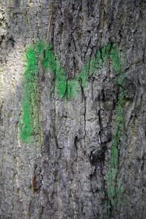 Grünes M