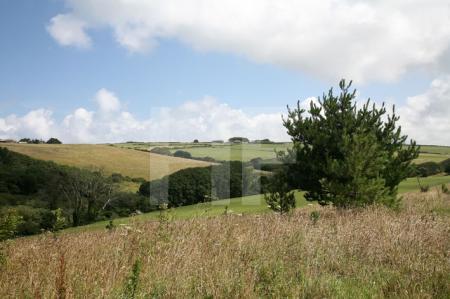 Landschaft bei Polzeath, Cornwall (6)