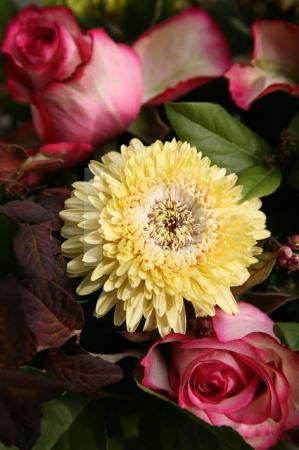 Pinke Rosen und gelbe Aster