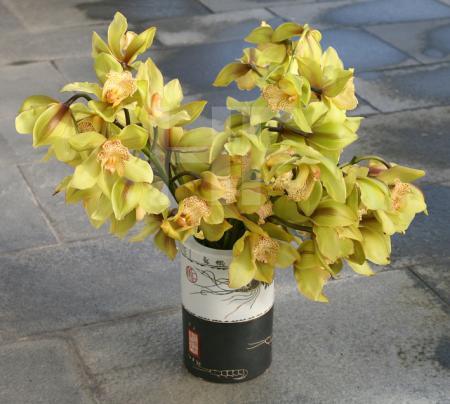 Grüne Orchideen in Vase