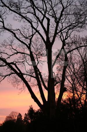 Winterliches Morgenrot