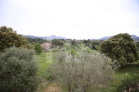 Landschaft im Nordosten Mallorcas