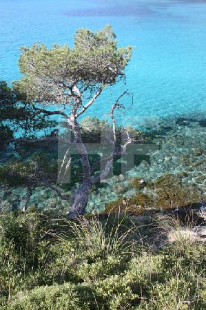 Das Wasser in der Bucht von Canyamel, Mallorca