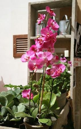 Orchidee vor einem Blumenladen in Artà, Mallorca