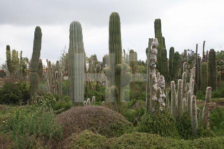 "Im botanischen Garten ""Botanicactus"" bei Ses Salines, Mallorca (2)"