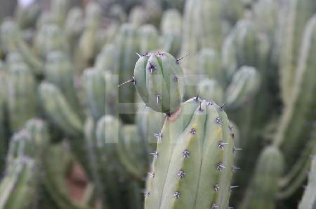 "Im botanischen Garten ""Botanicactus"" bei Ses Salines, Mallorca (10)"