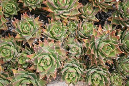 "Im botanischen Garten ""Botanicactus"" bei Ses Salines, Mallorca (18)"