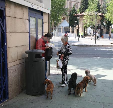 Straßenszene mit Hunden in Palma de Mallorca