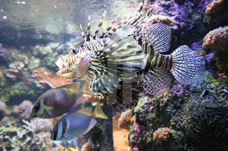 Tropisches Aquarium im Océanopolis, Brest, Bretagne (2)