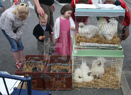 Hühner zum Verkauf am Markt von Lesneven, Bretagne