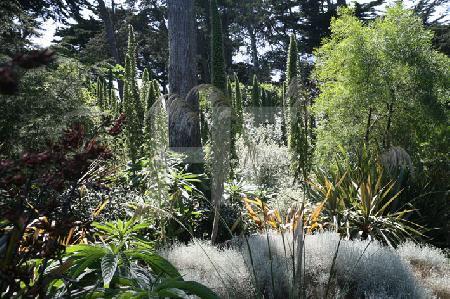 Im Jardin Georges-Delaselle auf der Ile de Batz, Bretagne