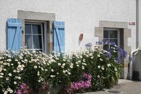 Blumen vor einem Haus auf der Ile de Batz, Bretagne
