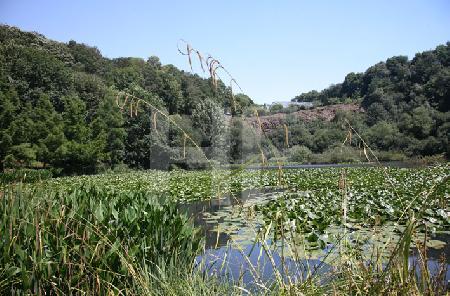 Im Park des Conservatoire Botanique in Brest, Bretagne