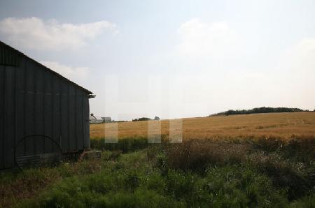 Schuppen und Kornfeld, Finistere, Bretagne