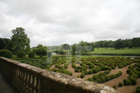 Ein neues Labyrinth wächst heran. Longleat House, Wiltshire