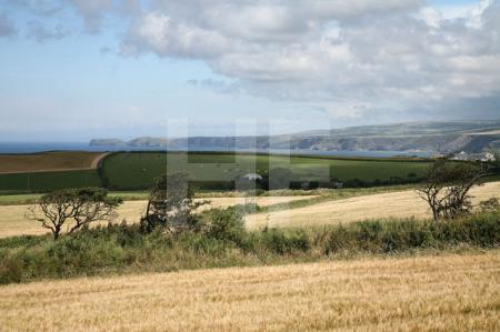 Landschaft bei Trelights, Cornwall (1)