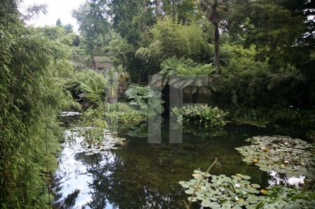 """The Lost Gardens of Heligan"" bei Mevagissey, Cornwall (17)"