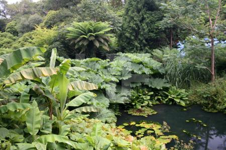 """""""The Lost Gardens of Heligan"""" bei Mevagissey, Cornwall (18)"""